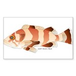 Copper Rockfish fish Sticker (Rectangle 10 pk)