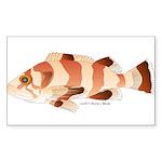 Copper Rockfish fish Sticker (Rectangle 10 pk)