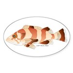 Copper Rockfish fish Sticker (Oval 10 pk)