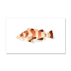 Copper Rockfish fish Car Magnet 20 x 12