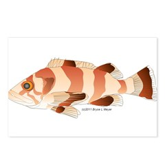 Copper Rockfish fish Postcards (Package of 8)