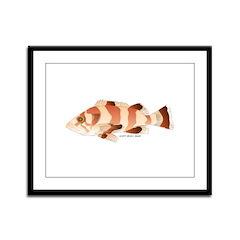 Copper Rockfish fish Framed Panel Print