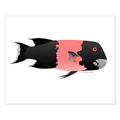Copper Rockfish fish Posters
