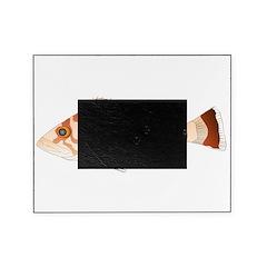 Copper Rockfish fish Picture Frame