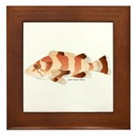 Copper Rockfish fish Framed Tile