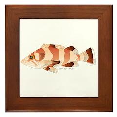 Copper Rockfish fish Framed Tile