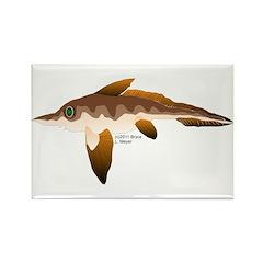 Longnosed Ratfish (Chimera) Rectangle Magnet (100