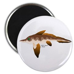 Longnosed Ratfish (Chimera) Magnet