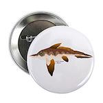 Longnosed Ratfish (Chimera) 2.25