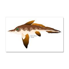 Longnosed Ratfish (Chimera) Car Magnet 20 x 12