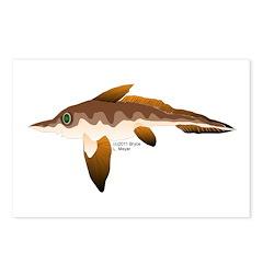 Longnosed Ratfish (Chimera) Postcards (Package of