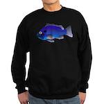 Blue Rockfish (Blue Perch) Scorpionfish fish Sweat