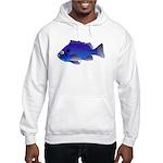 Blue Rockfish (Blue Perch) Scorpionfish fish Hoode