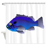 Blue Rockfish (Blue Perch) Scorpionfish fish Showe