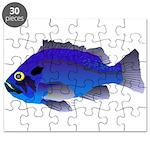 Blue Rockfish (Blue Perch) Scorpionfish fish Puzzl
