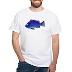 Blue Rockfish (Blue Perch) Scorpionfish fish White