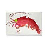 Deep Sea Red Shrimp Rectangle Magnet (100 pack)