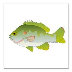 Redear Sunfish fish Square Car Magnet 3