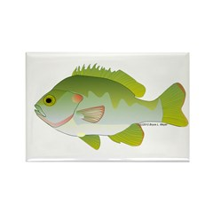 Redear Sunfish fish Rectangle Magnet (10 pack)