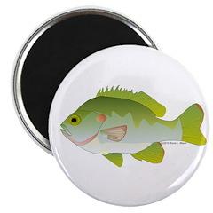 Redear Sunfish fish Magnet