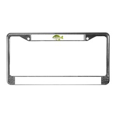 Redear Sunfish fish License Plate Frame