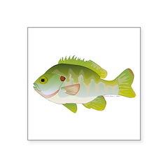Redear Sunfish fish Square Sticker 3