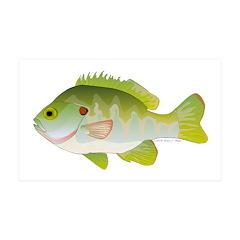 Redear Sunfish fish Wall Decal