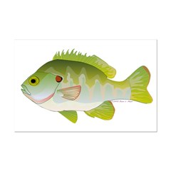 Redear Sunfish fish Posters
