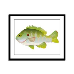 Redear Sunfish fish Framed Panel Print