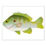 Redear Sunfish fish Small Poster