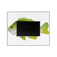 Redear Sunfish fish Picture Frame