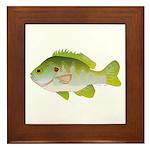 Redear Sunfish fish Framed Tile