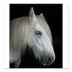 "white horse Square Car Magnet 3"" x 3"""