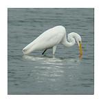 Great Egret Drinking Tile Coaster