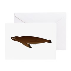 California Sea Lion Greeting Cards (Pk of 10)