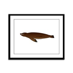 California Sea Lion Framed Panel Print