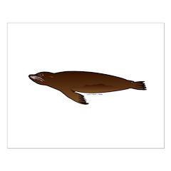 California Sea Lion Posters