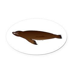 California Sea Lion Oval Car Magnet