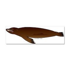 California Sea Lion Car Magnet 10 x 3
