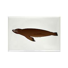 California Sea Lion Rectangle Magnet (100 pack)