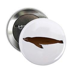 California Sea Lion 2.25