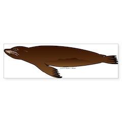 California Sea Lion Sticker (Bumper 50 pk)