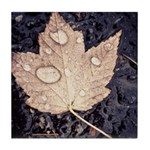 Autumn Leaf Tile Tile Coaster