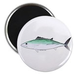 Bonito tuna fish Magnet