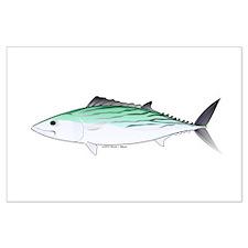 Bonito tuna fish Large Poster