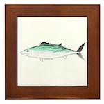 Bonito tuna fish Framed Tile