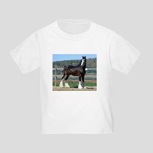 Ruskington Danny, English Shire Stallion Toddler T