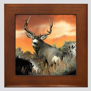 buck mule deer Framed Tile
