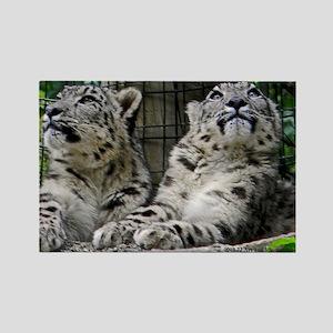 Snow Leopard Cubs Rectangle Magnet