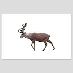 Deer Stag. Large Poster
